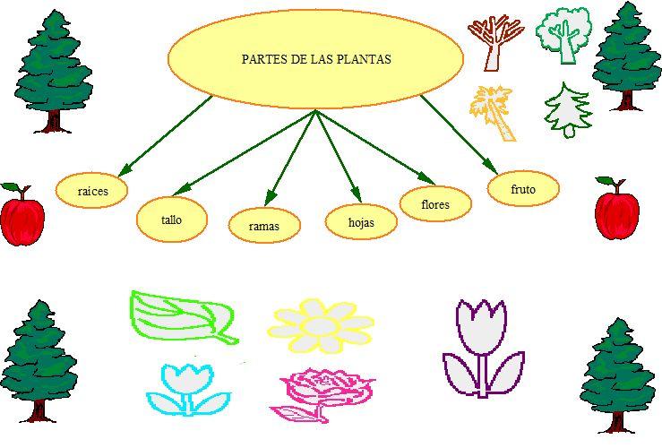 PARTES DE LAS PLANTAS. LUCÍA Y PILAR