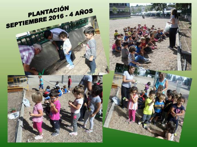 plantacion-4-anos