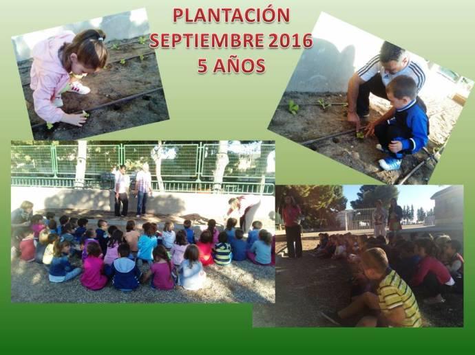 plantacion-5-anos